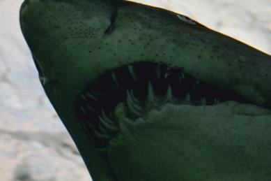 shark-04a