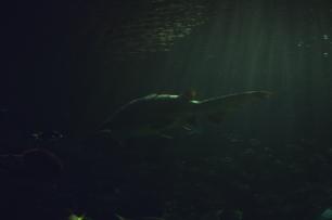 shark-06a