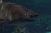 shark-14a